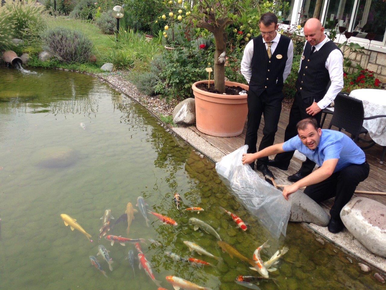 Koi teich wellnesshotel parc in kaltern for Koi und goldfische in einem teich