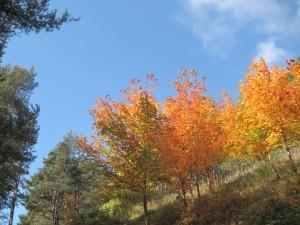 Herbst in Kaltern
